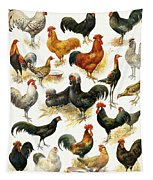 Poultry Tapestry