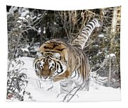 Pounced Tapestry