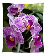 Pretty Purple And White Tapestry