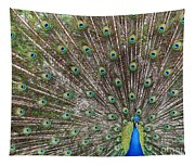 Proud Peacock Tapestry