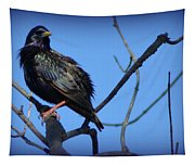 Puffed Up Starling Tapestry