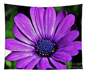 Purple African Daisy Tapestry
