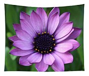 Purple Daisy Square Tapestry