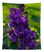 Purple French Lilac Tapestry