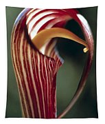 Purple Jack In Pulpit Tapestry