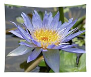 Purple Water Lily Flowers Blooming In Pond Tapestry