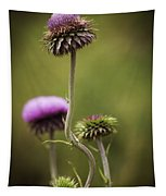 Purple Star Thistle Tapestry