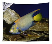 Queen Angelfish Tapestry