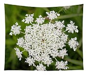 Queen Anne's Lace No 2 Tapestry