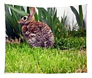 Rabbit As A Painting Tapestry