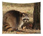 Raccoon #4 Tapestry
