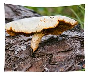 Raggedy Toadstool Tapestry
