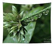Rain On The Umbrella Plant 2 Tapestry