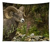 Ram Eating Fireweed Tapestry