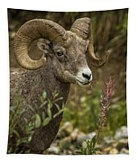 Ram Eating Fireweed Cropped Tapestry