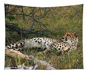 Reclining Cheetah 2 Tapestry