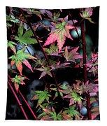 Red Bark Maple  Tapestry