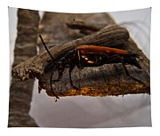 Red Beetle At Twlight Tapestry
