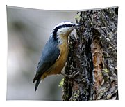 Red Breasted Nuthatch Tapestry