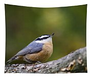 Red-breasted Nuthatch Tapestry