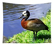 Red Breasted Wood Duck Tapestry