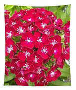 Red Dianthus Tapestry