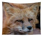 Red Fox Portrait 2 Tapestry