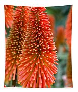 Red-hot Poker Flower Kniphofia Tapestry