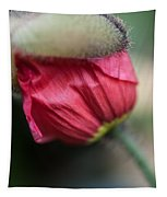 Red Poppy Sneaking Out Tapestry