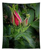 Red Rugosia Bud Tapestry