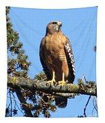 Red Shouldered Hawk Tapestry