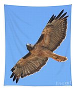 Red Tailed Hawk In Flight Tapestry