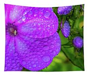 Refreshed Phlox 2 Tapestry
