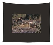 Resting Coyote Tapestry