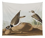 Ring Plover  Tapestry
