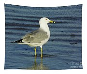Ringed Billed Sea Gull Tapestry