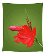 Ritzy Red Tapestry