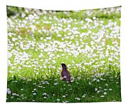 Robin In A Field Of Daisies Tapestry
