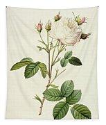 Rosa Centifolia Mutabilis Tapestry