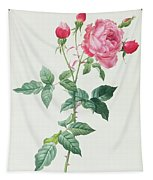 Rosa Indica Tapestry