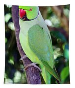 Rose-ringed Parakeet Tapestry