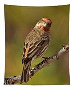 Rosy Finch Posing I Tapestry