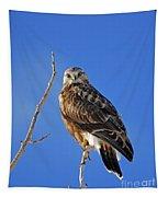 Rough-legged Hawk Tapestry