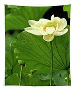 Sacred Lotus In Black Frame Tapestry