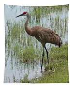 Sandhill In The Marsh Tapestry