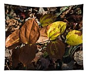 Sawbrier Or Greenbriar In The Fall Tapestry