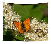 Scarce Copper 2 Tapestry