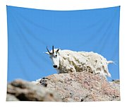 Scruffy Mountain Goat On The Mount Massive Summit Tapestry