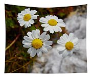 Sea Mayweed Tapestry