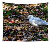 Seagull In The Fallen Leaves Tapestry